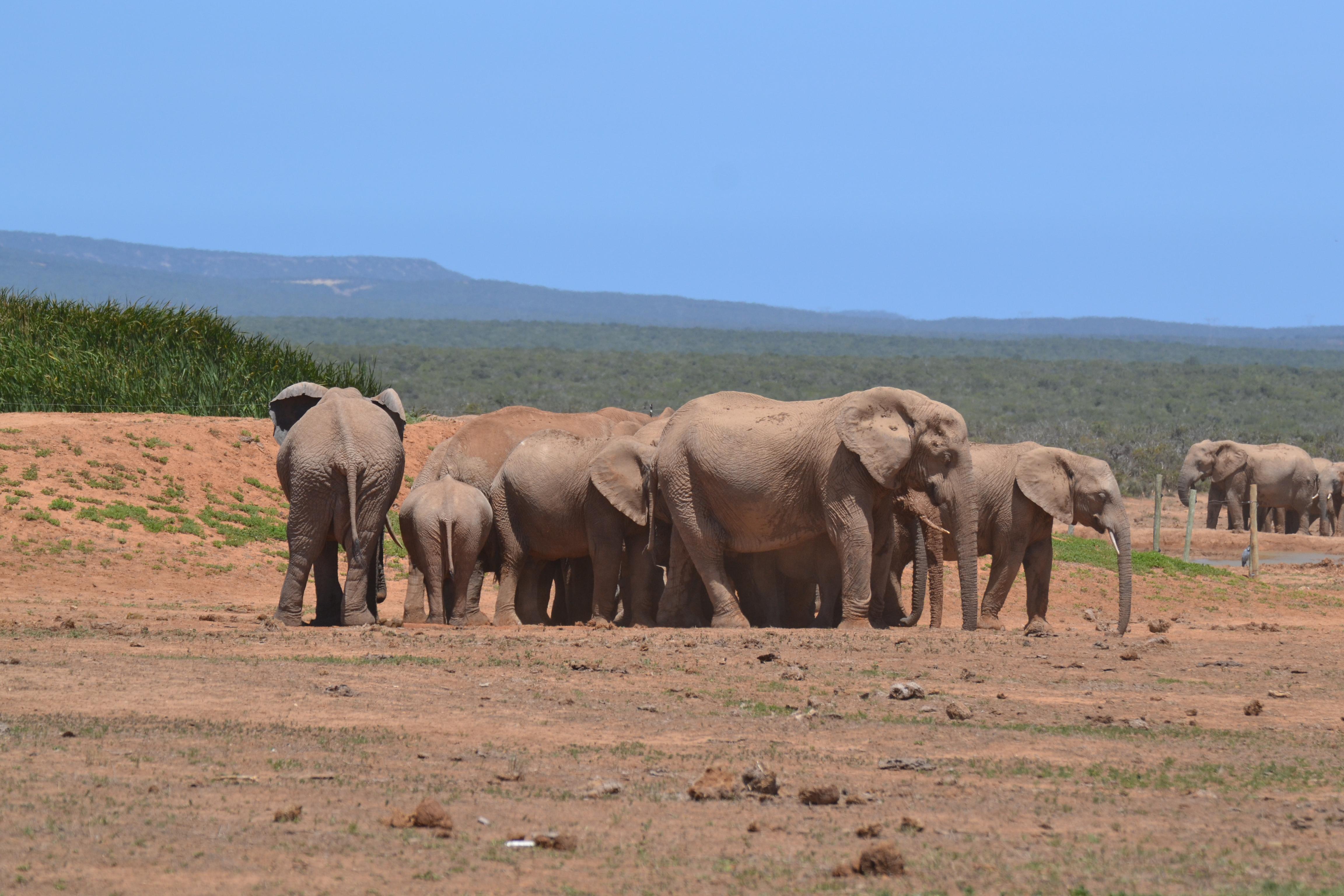 Elefanten im Addo National Park