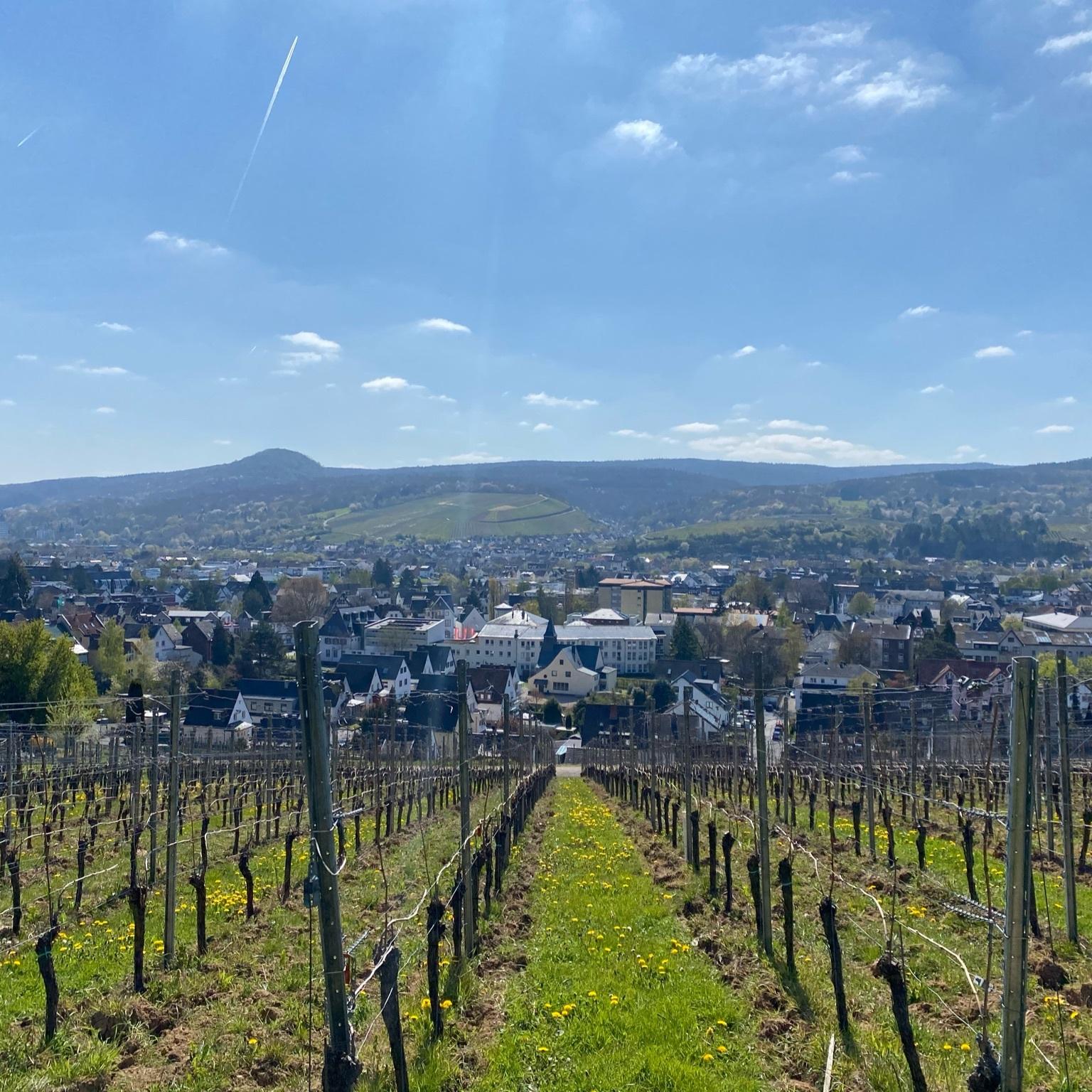 Blick auf Weinberge und Ahrweiler