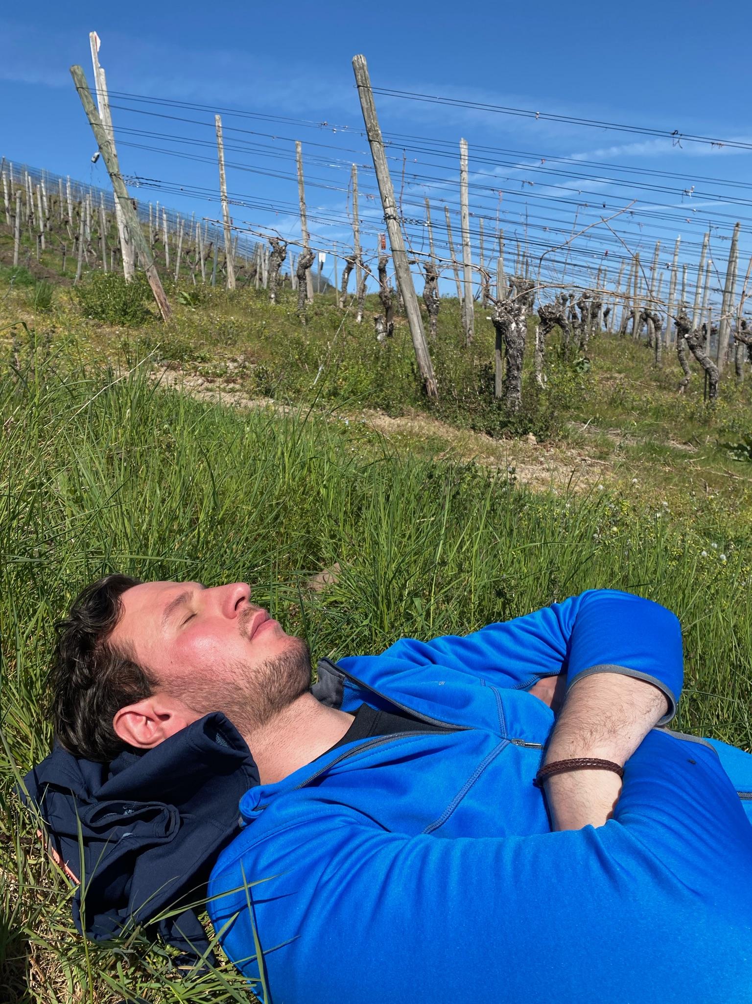Malte entspannt in den Weinbergen am Rotweinwanderweg