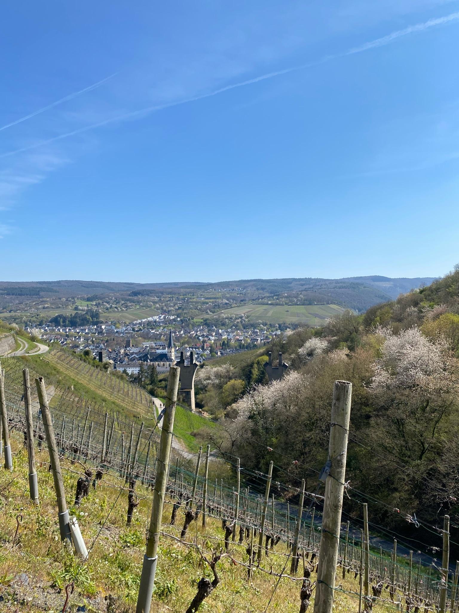 Weinberge, Ahrweiler