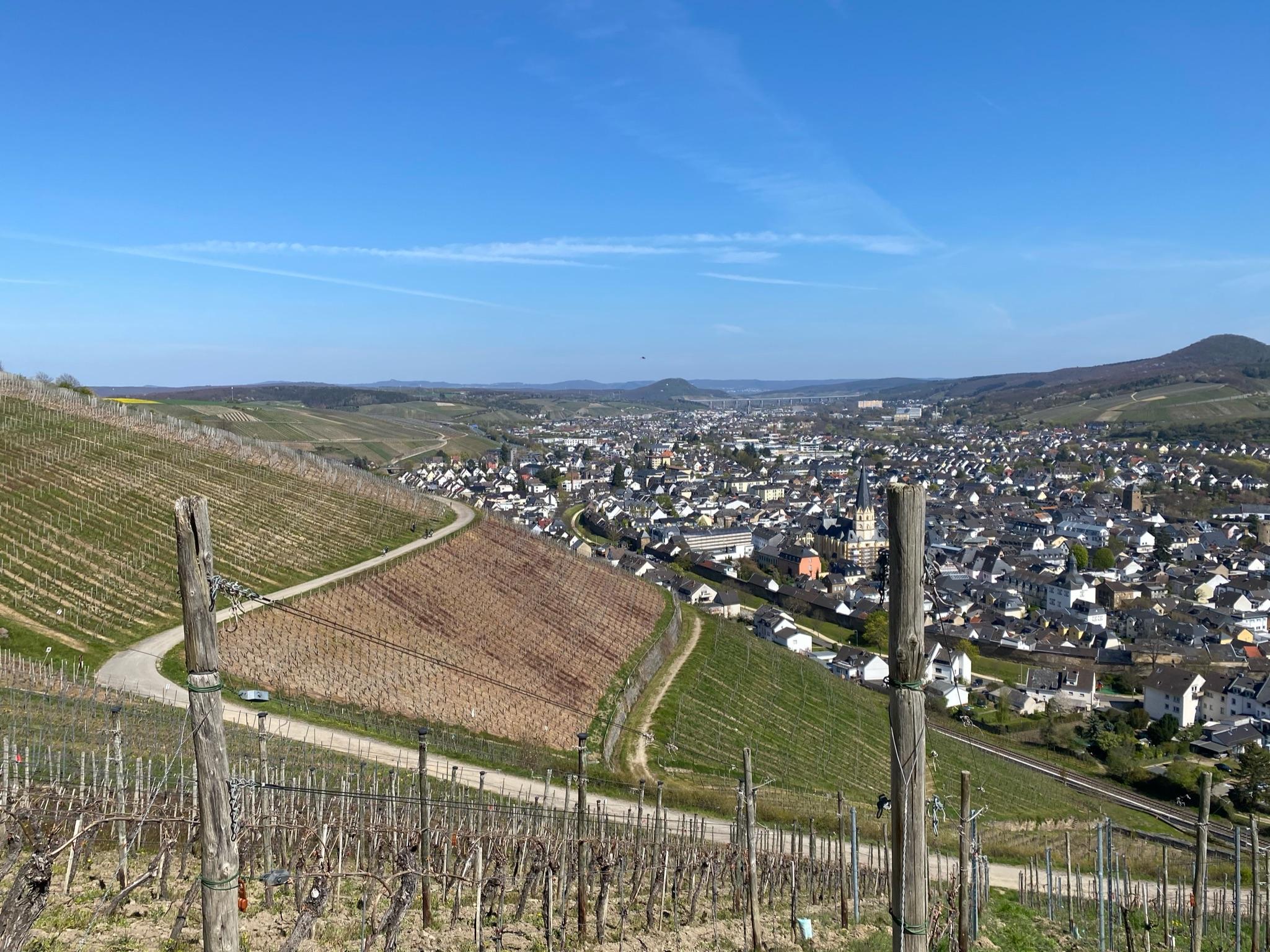 Blick auf die Weinberge bei Ahrweiler