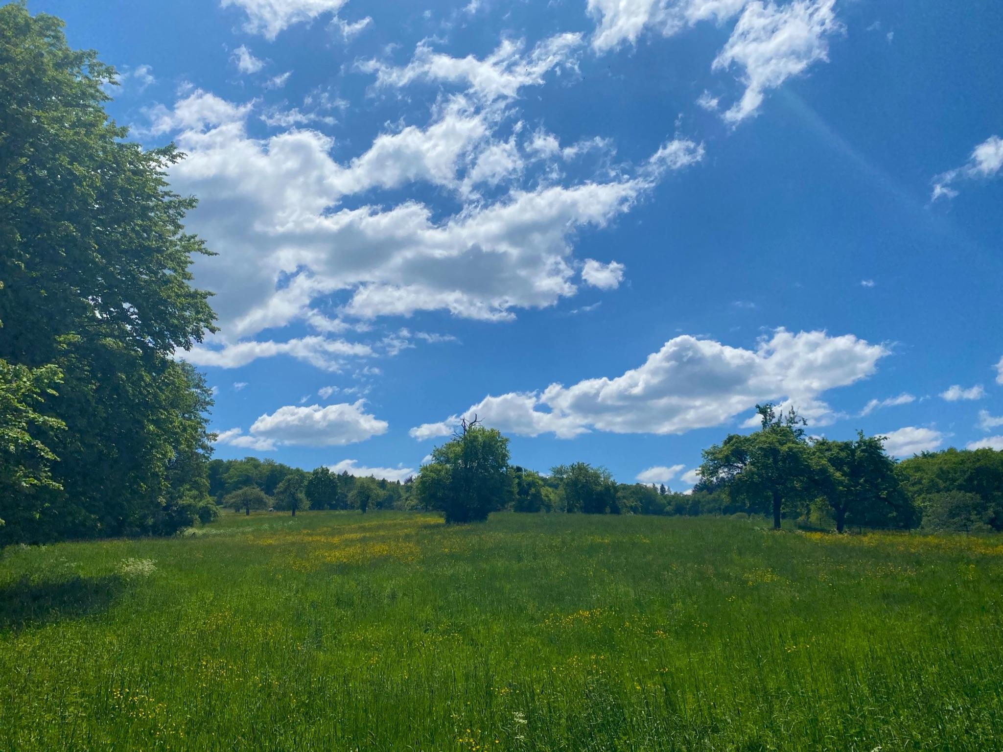 Feld im Siebengebirge