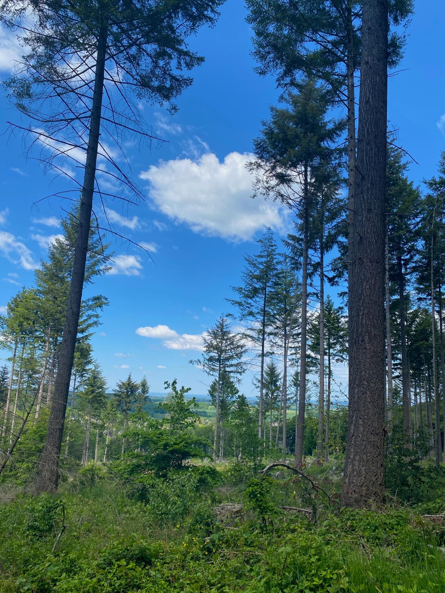 Blick in die Wälder des Siebengebirge