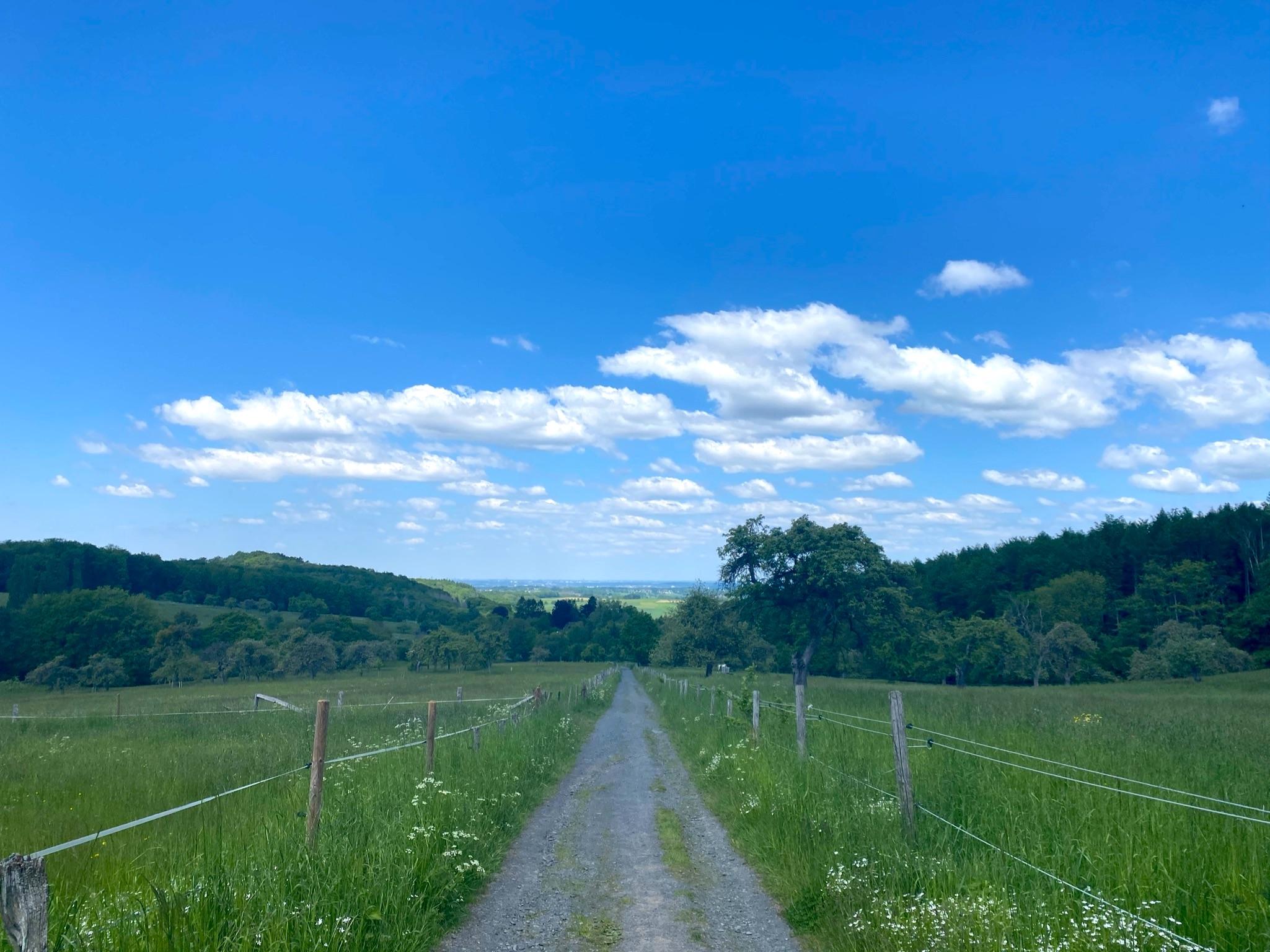 Feldweg im Siebengebirge