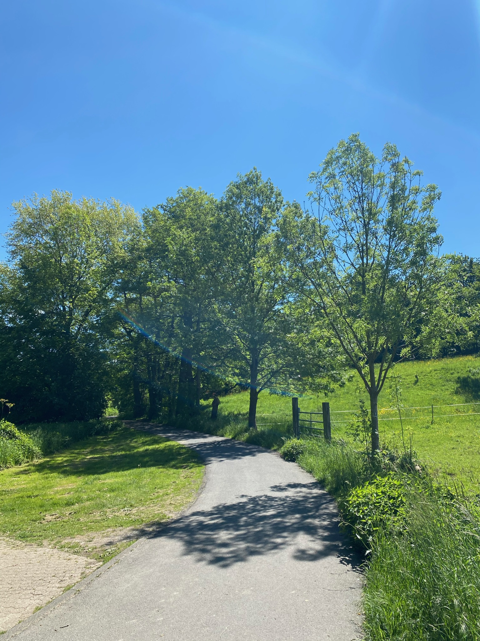 Waldweg im Siebengebirge