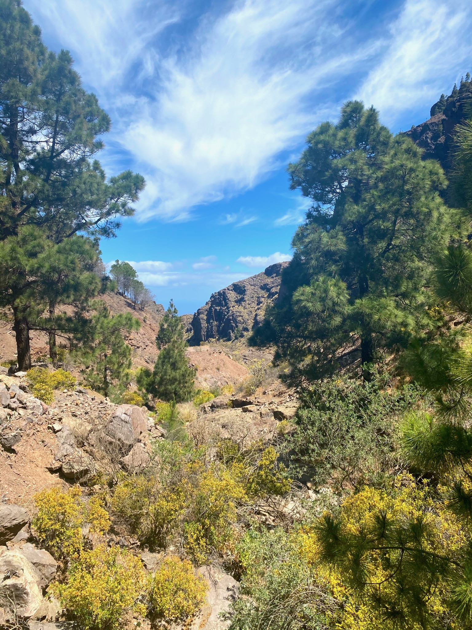 Ausblick im Tamadaba Nationalpark
