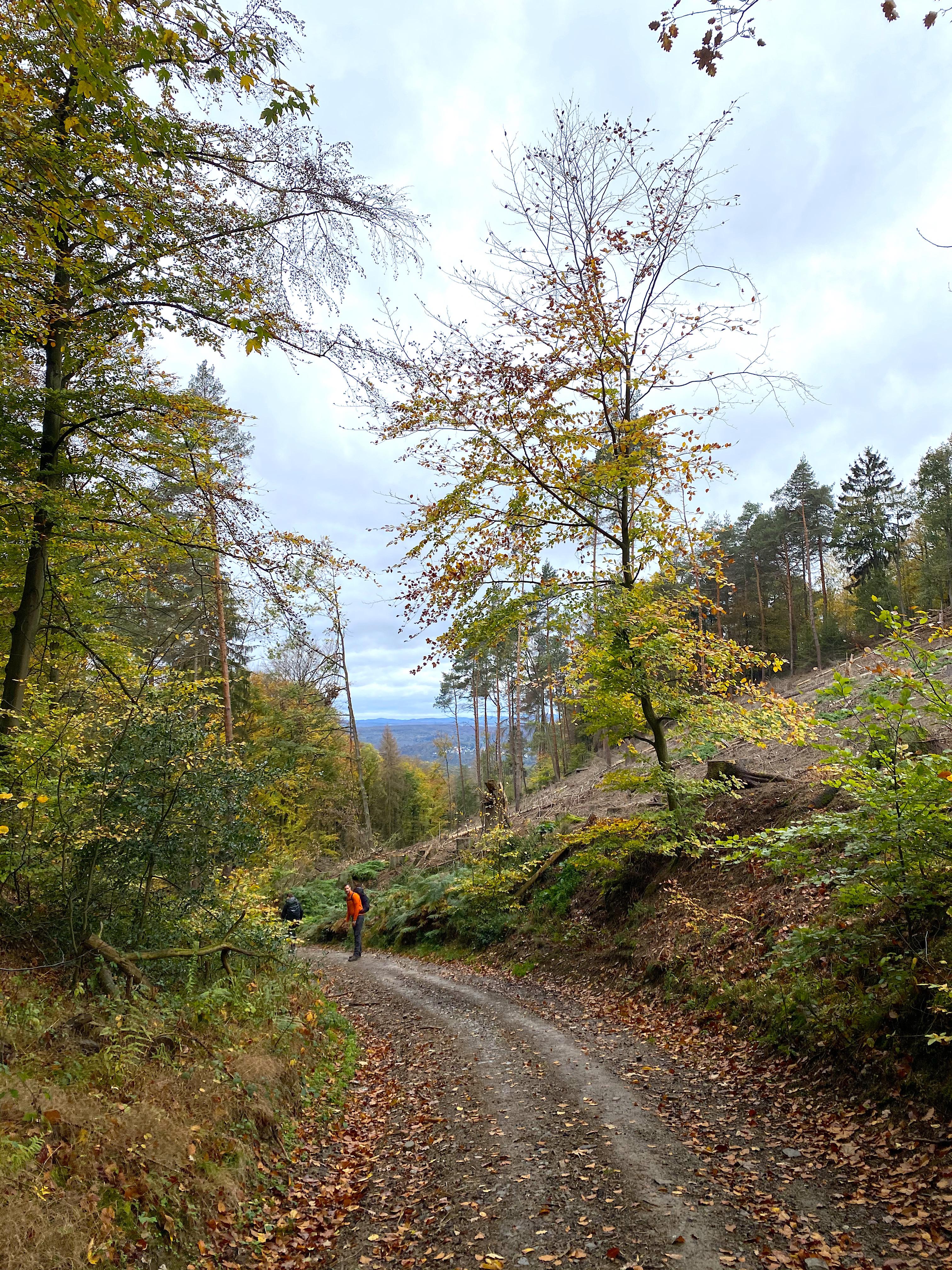 Wanderweg auf der dritten Etappe des Rheinsteigs