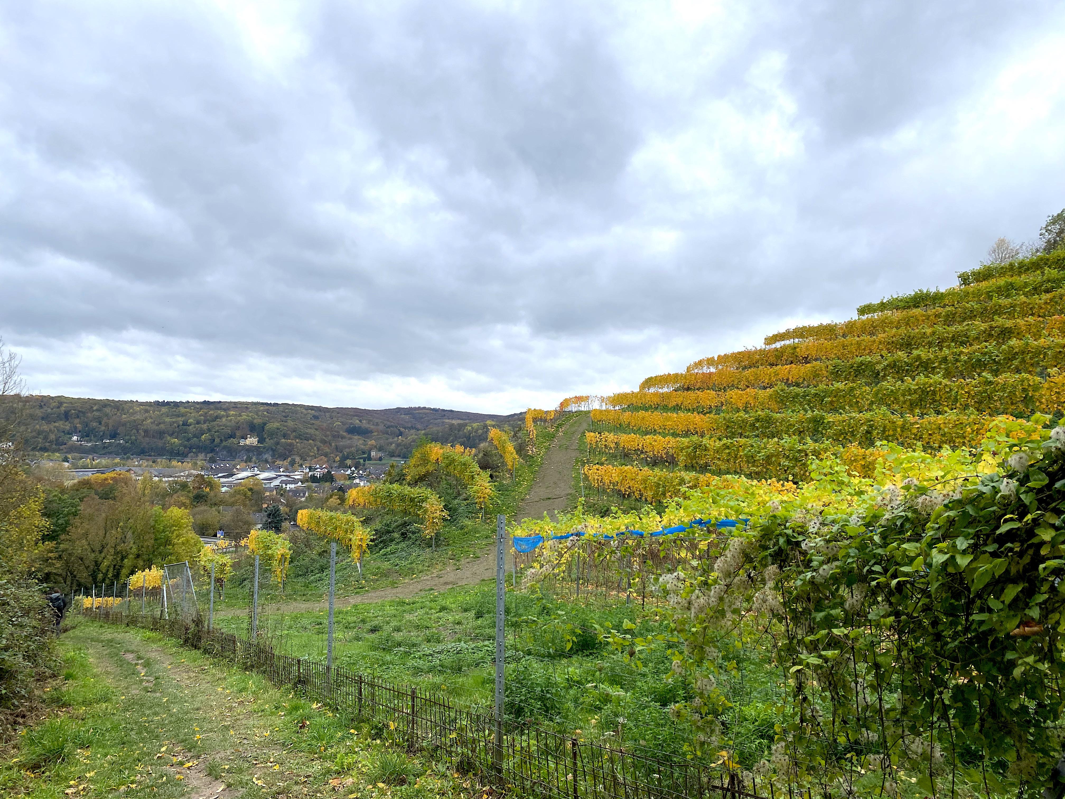Weinberge auf dem Rheinsteig