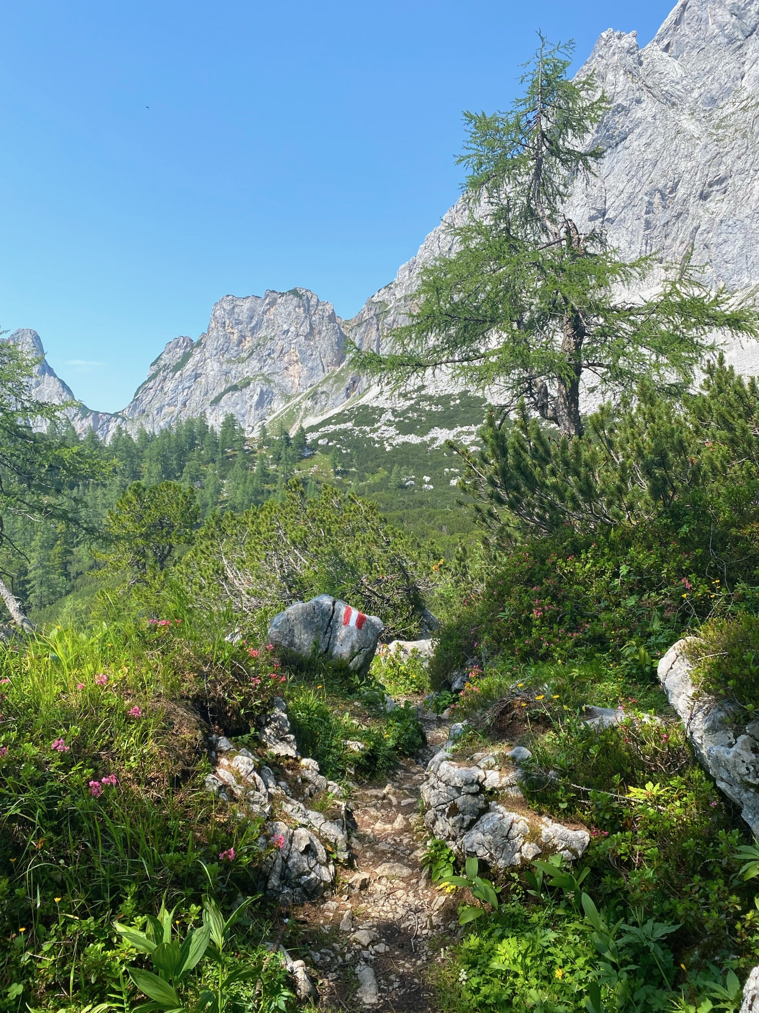 Wandern durch die Alpen